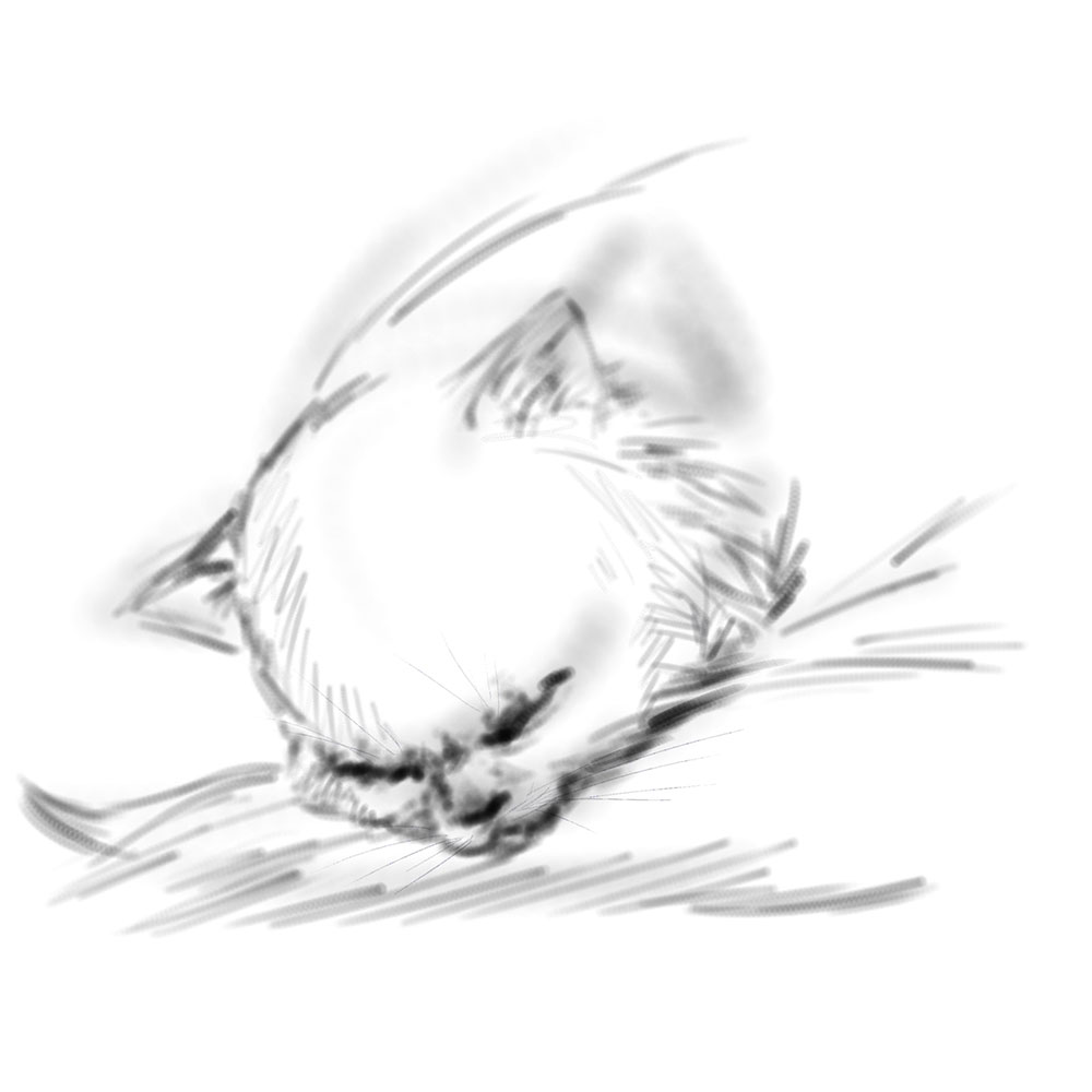 Gato dormido. Ilustración digital en Painter